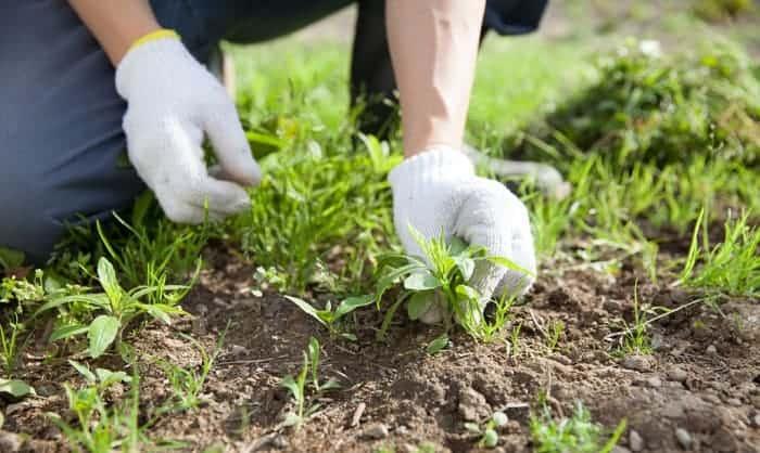 best-work-gloves-for-landscaping