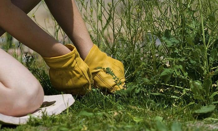 best-yard-work-gloves