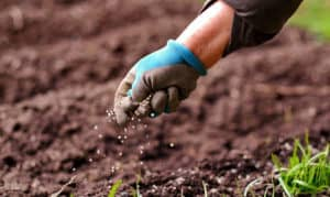 why is it wise to wear gloves when spreading fertilizer